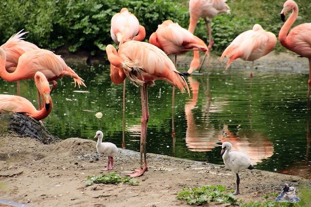 Tierpark Berlin 24.06.2014  106