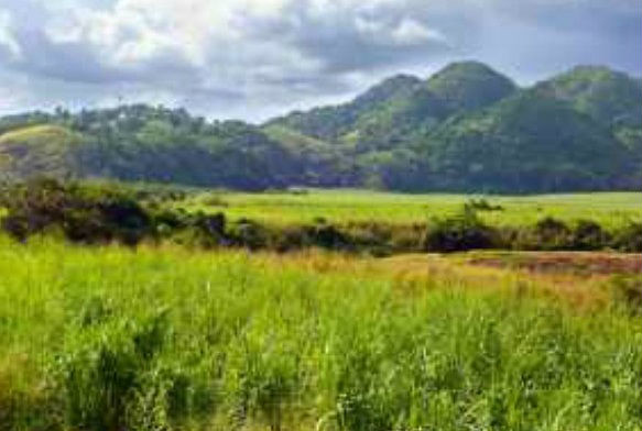 Sitio natural de Jamaica, en lista de Patrimonio de la Humanidad