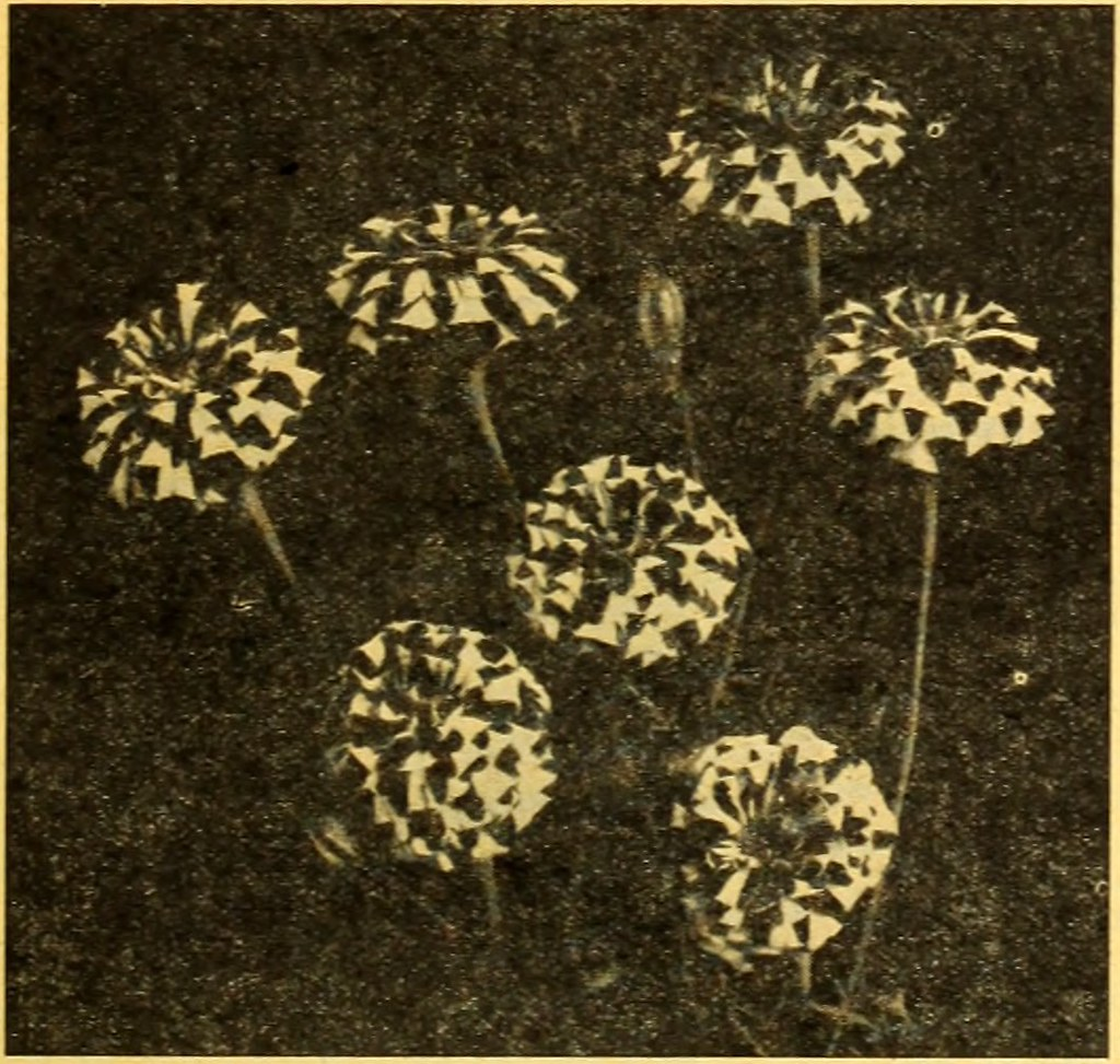 Image from page 18 of \