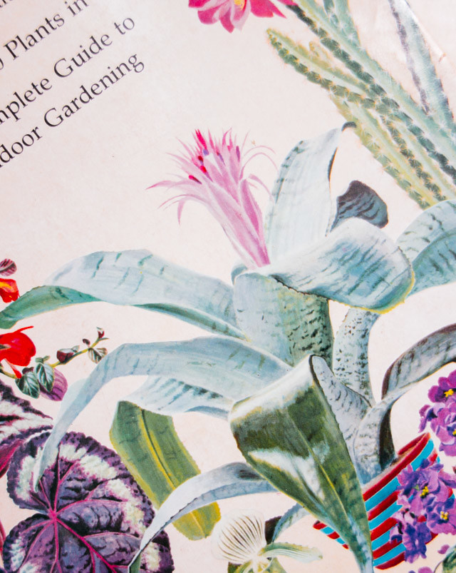 the total book of house plants front cover illustrations