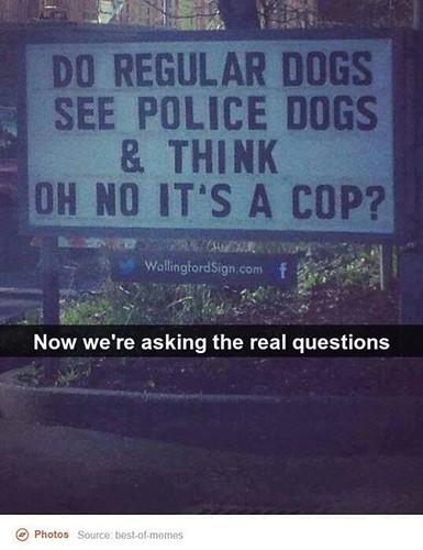 dogcop