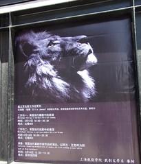 Shanghai Lion