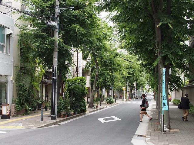 P6050299 greenery