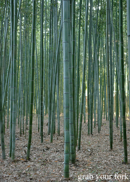Bamboo forest at Arashiyama, Kyoto, Japan