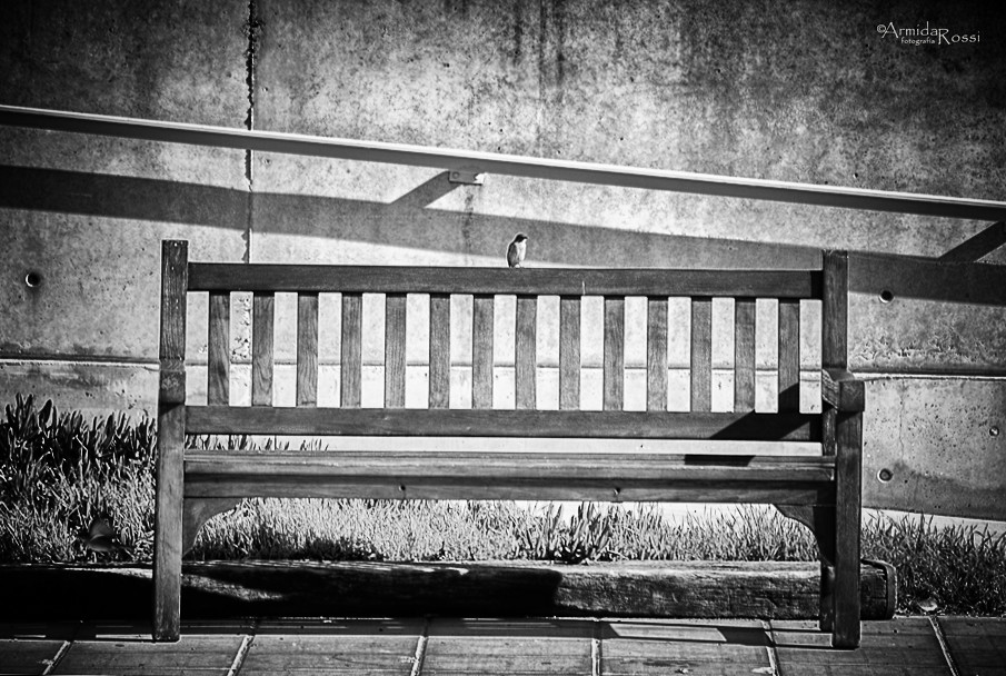 Alas En El Pecho Si Tu Pecho Se Llena De Alas Que Quieren Flickr