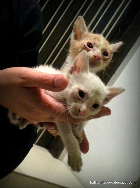 stray cats 08