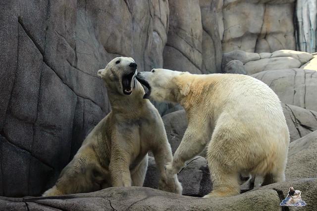 Tierpark Hagenbeck Dschungelnacht 06.05.2015   29