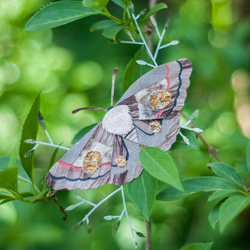 Moth In The Garden by Tara Galuska
