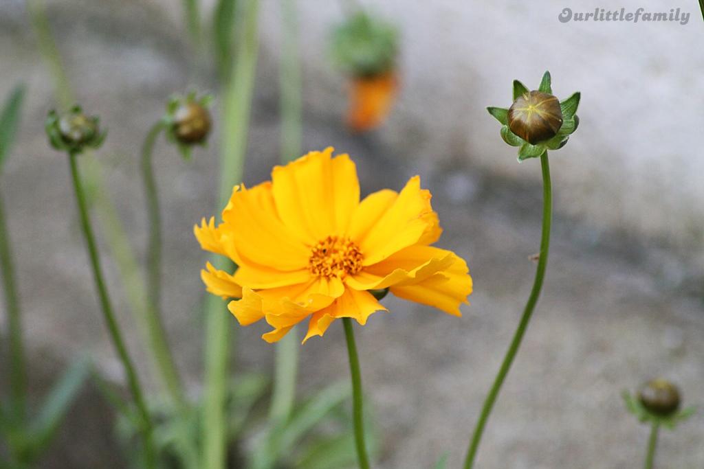 mon jardin 5