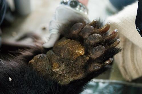 Xuan Xuan's paw