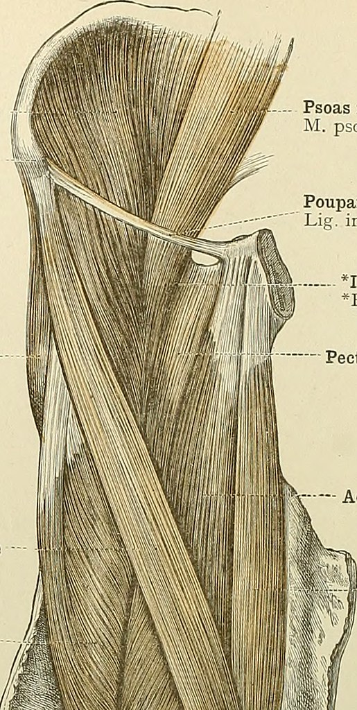 Image From Page 101 Of An Atlas Of Human Anatomy For Stud Flickr