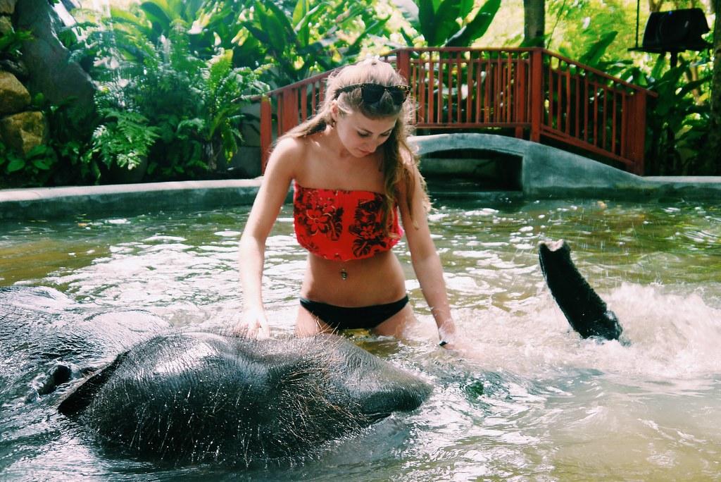 Elephant bathing / travel / KWB