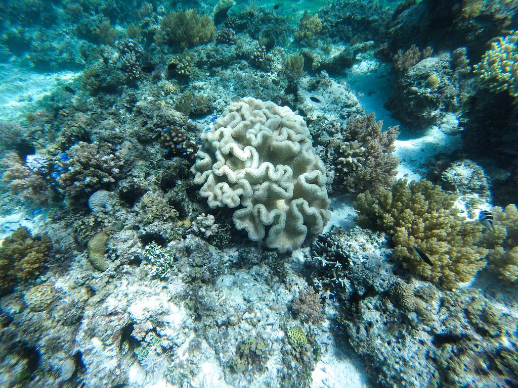 Coral en Balicasag