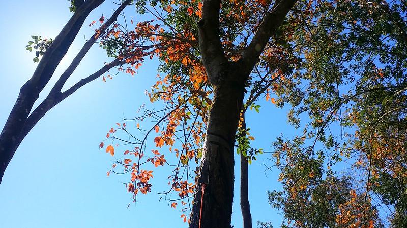 Kinh nghiệm du lịch Pleiku-rừng cao su Yaly