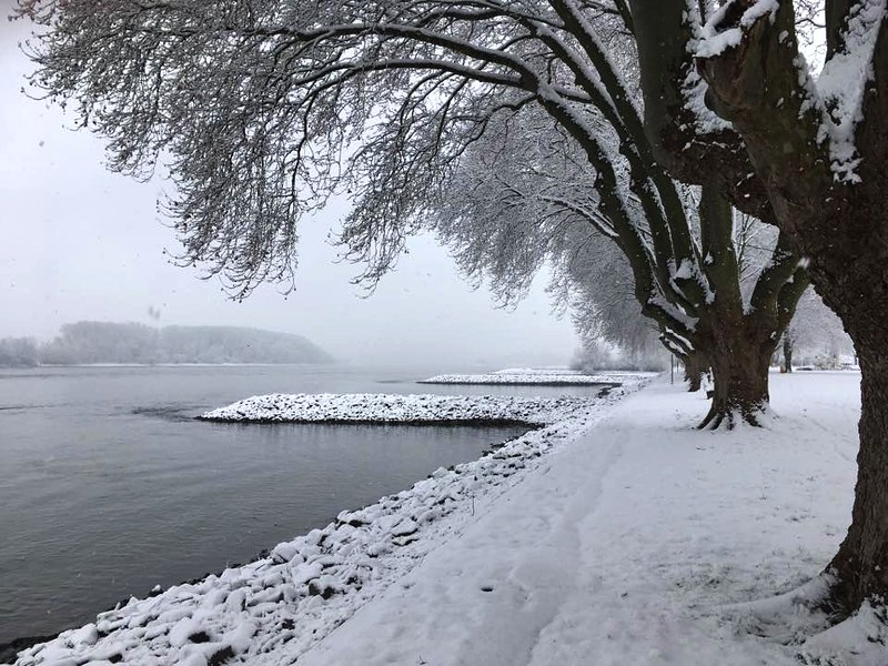 Winter im Rheingau, 2