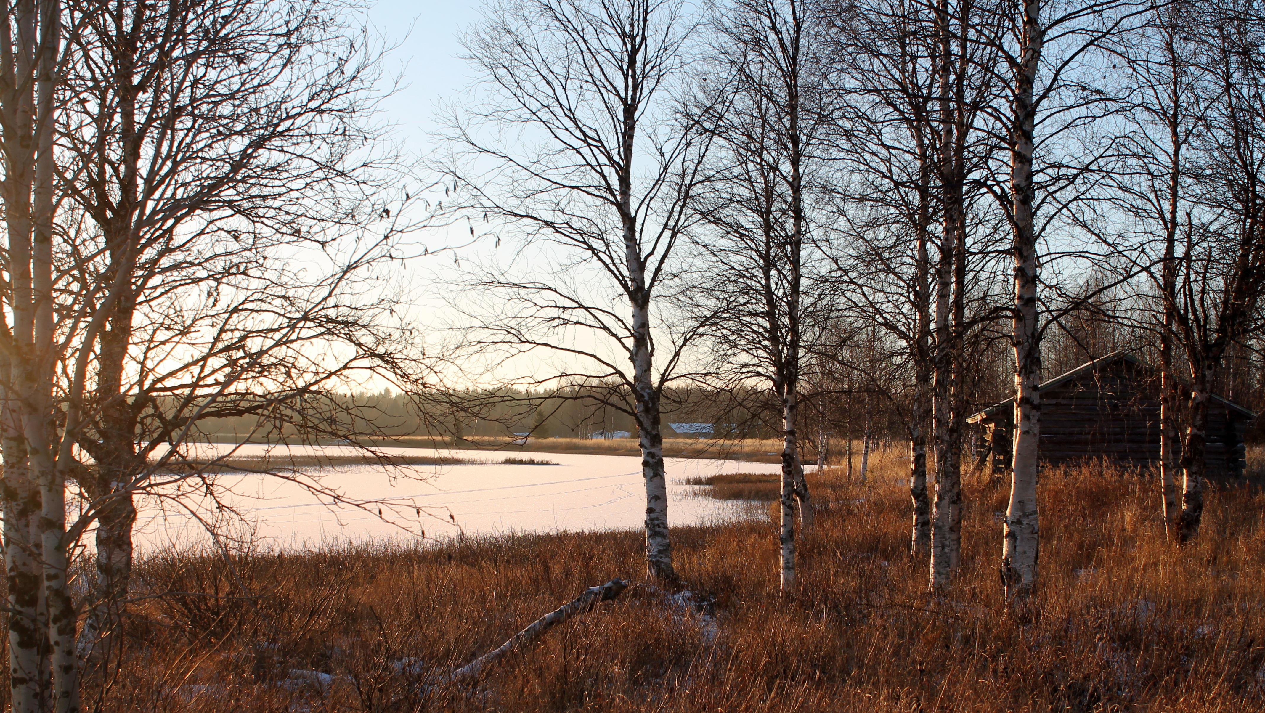 ylläsjärvi ranta