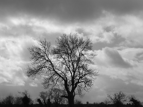 Tree and Clouds | by Elfleda