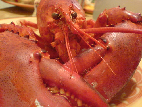 Maine Lobster from Eric | by man pikin