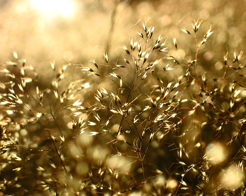 Sunlight Seeds | by Lookfar