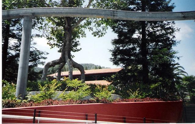 Circus trees bonfante gardens gilroy ca melissa for Gilroy garden trees