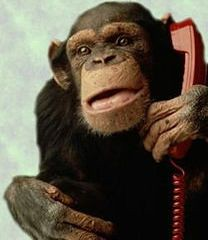 Monkey on Phone | by basketbawful