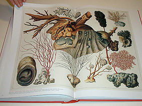Albertus Seba Cabinet Of Natural Curiosities Leafing Thro Flickr