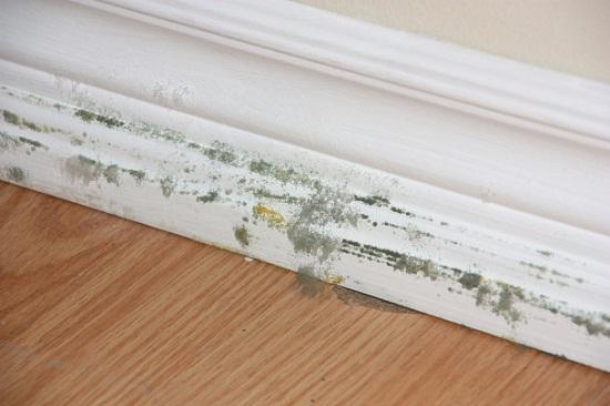 Chống ẩm cho tường nhà vào mùa mưa