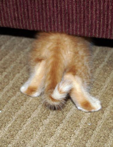 blogpaws-kittensC01646