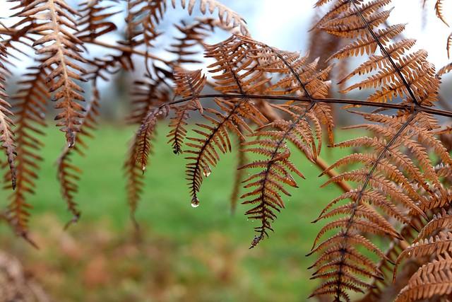 Winter in Rural Brittany | www.rachelphipps.com @rachelphipps