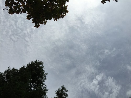 day160: looking up at the cloudy sky