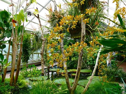 la serre aux orchid es jardin botanique de brooklyn brooklyn new york city new york. Black Bedroom Furniture Sets. Home Design Ideas