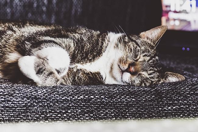 Instagram, Monatsrückblick Mai, Katze
