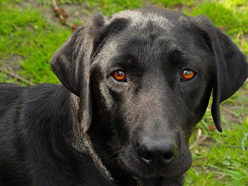 Our dog Makker