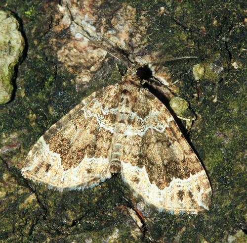 Devon Carpet 7546