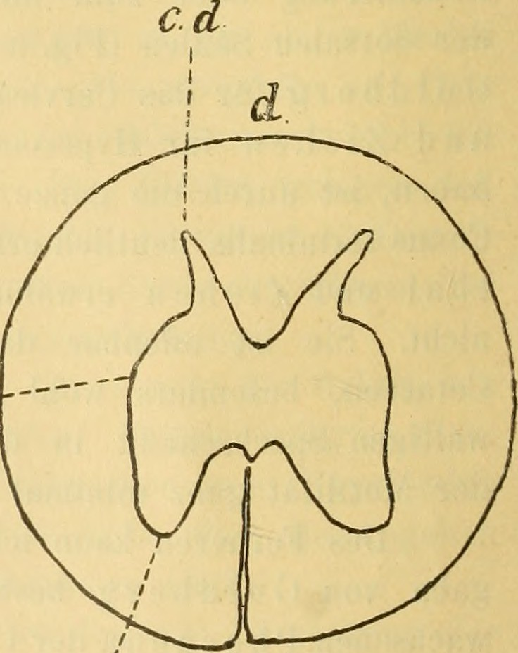 Image from page 9 of \