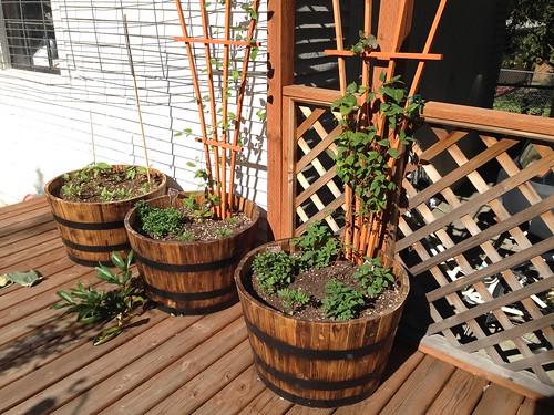 vining barrels
