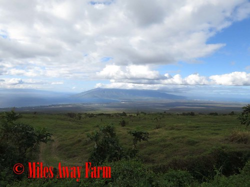 Upcountry View Maui