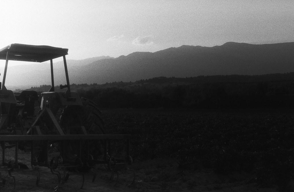 Campo II.