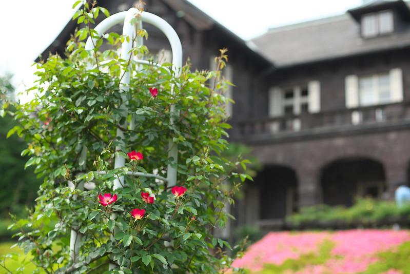 東京路地裏散歩 旧古河庭園 2015年6月13日