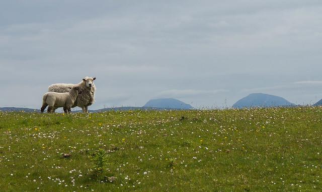 Scotland-43.jpg