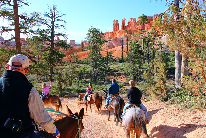 IMG_4497 Mule Ride, Bryce Canyon National Park