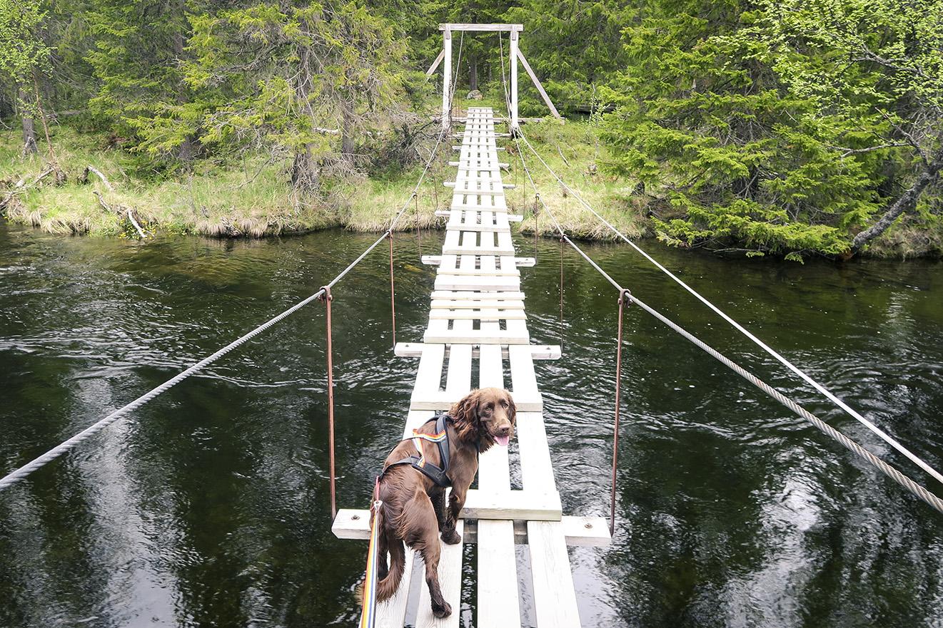 Bäverkroken, Åre www.traningsgladje.se