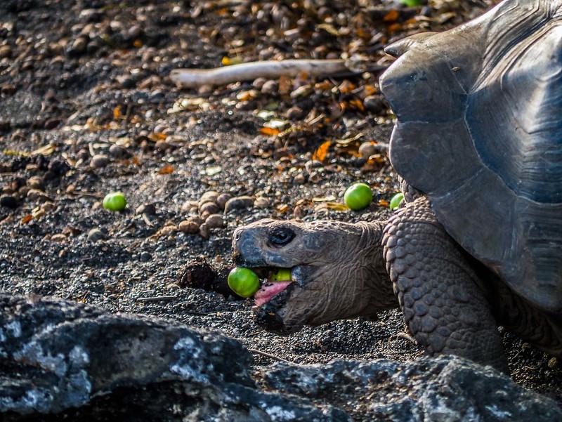 Galapagos-64.jpg