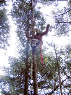 木登り・猛禽類