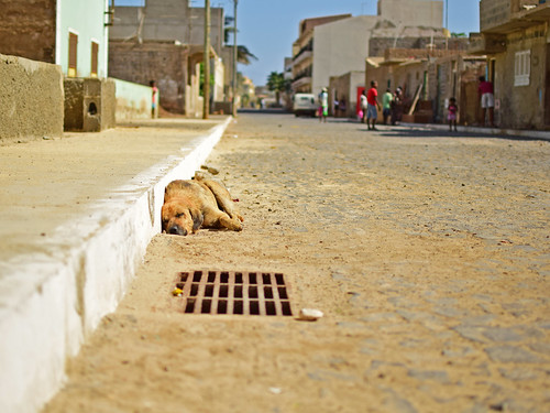 Cape verde street dog | by roan.retera