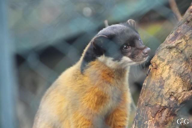 Tierpark Friedrichsfelde 22.01.201767