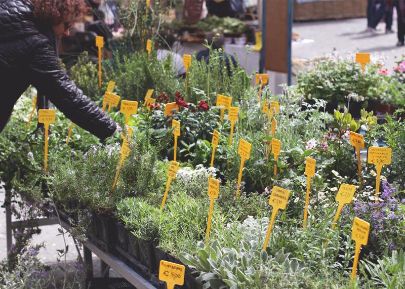 Flower markets Florence, Bumpkin Betty