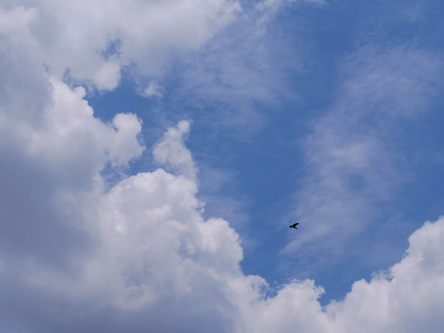 Sky, with a bird flying