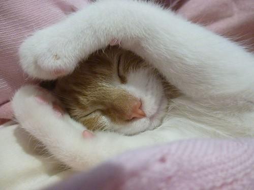 sleepypets