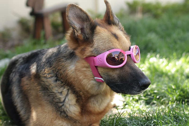 you can see Little L in the reflection on her doggles